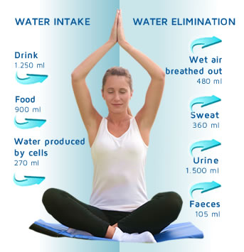 How does the Water enter into our body and then is eliminated